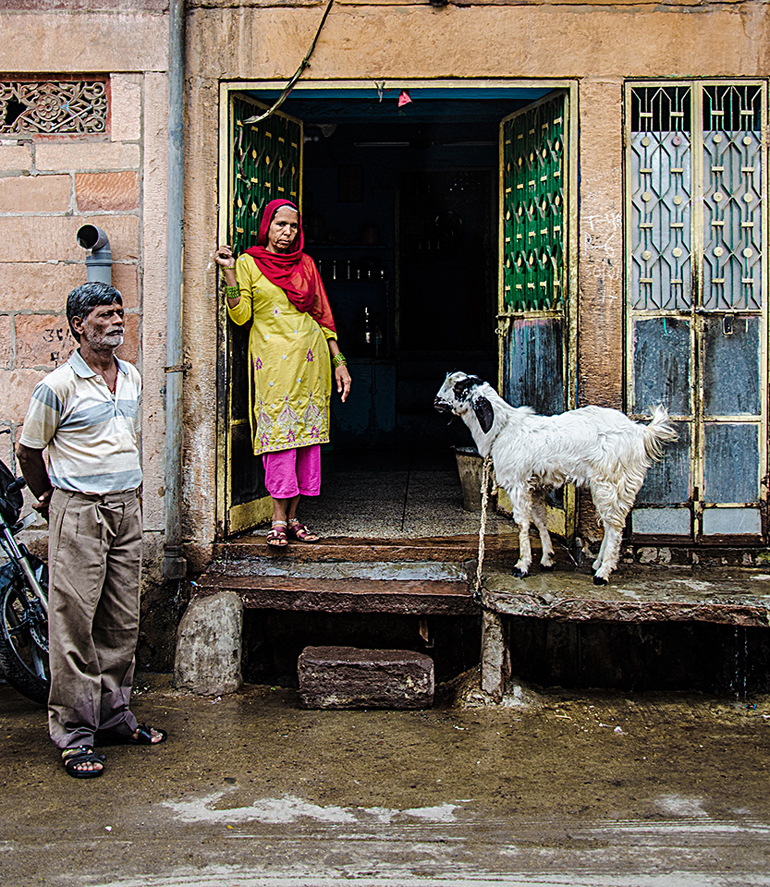 Image of goat in India Fran Harper